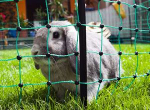 Síťová ohrada králík, slepice 50m zelená nizká
