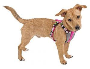 Postroj pro malé psy - S, růžový Kerbl