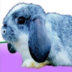 New Generation - zakrslý králík 400g, superprémiové extrudované krmivo Apetit