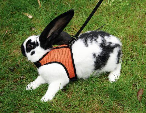 Postroj pro králíky SPORT