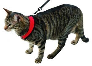 Postroj pro kočku ACTIVE