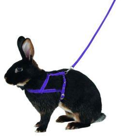 Postroj pro králičí agility, králičí hop M