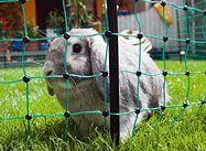 Spokojený králík