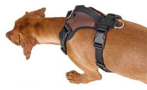 Postroj pro psy Pulsive L Kerbl