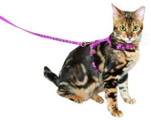 Vodítko s postrojem pro kočky