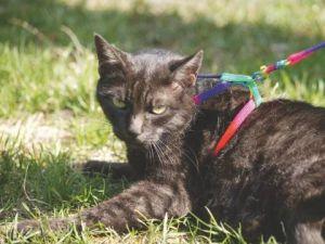 Kočičí postroj Rainbow