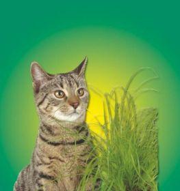 Tráva pro kočky 100g