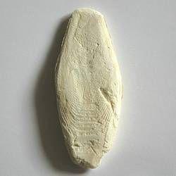 Apetit - sépiová kost pravá - volně ložená - 7,5-15cm - 1kg